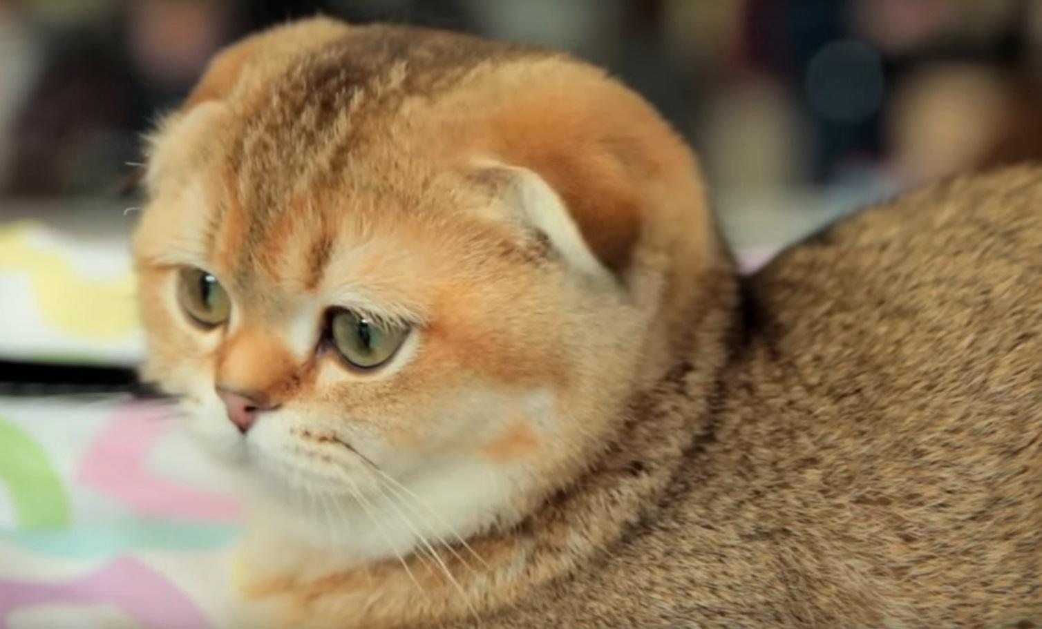 Кастрация кота заключается